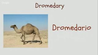 Mammals in Spanish