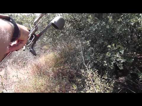 caccia cinghiale terza freccia
