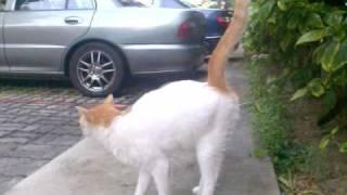 getlinkyoutube.com-i never know cat pee like this!!!