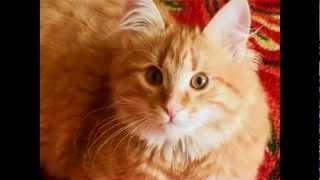 getlinkyoutube.com-Рыжий кот. Веселая детская песенка