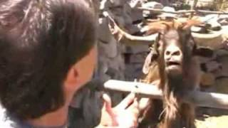 Man argues with spitting goat (funny English Subtitles)