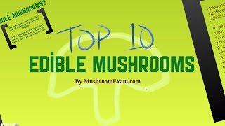getlinkyoutube.com-Top 10 Edible Mushrooms