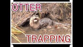 getlinkyoutube.com-Otter Trapping 2014 in Minnesota