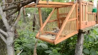 getlinkyoutube.com-Певчие птицы