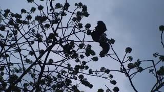 CRAZY AIR BATTLE - BATS VS CROWS