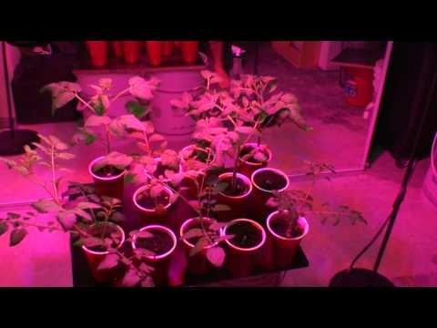 My Indoor Container Garden Grown By 90 Watt Led UFO Grow Light Update 1