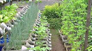 getlinkyoutube.com-Risers in container gardening
