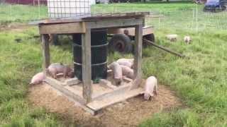 getlinkyoutube.com-Pasture Pig Feeder (Round One)