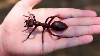 getlinkyoutube.com-GIGANTIC ANT!