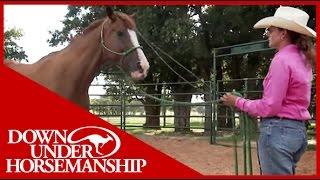 Clinton Anderson: More Horse Than Handle, Part 1 - Downunder Horsemanship