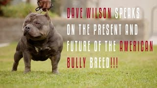 getlinkyoutube.com-DAVE WILSON: SPEAKS ON THE CURRENT STATE AND THE FUTURE OF THE AMERICAN  BULLY BREED