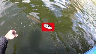 getlinkyoutube.com-【バス釣り】#63 千葉県亀山湖 かめかぜ【バスフィッシング】
