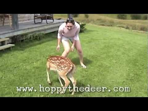 HOPPY THE DEER YOUNG AND BOUNCY
