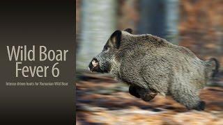 getlinkyoutube.com-Wild Boar Fever 6 - trailer 1 - Hunters Video