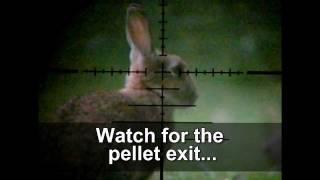 getlinkyoutube.com-Slow Motion Airgun Rabbit Hunting #7