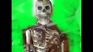 getlinkyoutube.com-Animated Skeleton