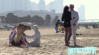 getlinkyoutube.com-Gold Digger Camel Prank!