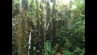 getlinkyoutube.com-Cloud forest greenhouse