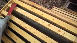 getlinkyoutube.com-Beekeeping: Wax or Plastic Foundations? Amazing Results