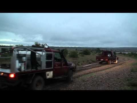 Pig Hunting - Bristle Busters 3