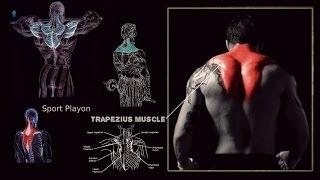 getlinkyoutube.com-افضل التمارين لعضلة الترابييس ومثلث الترابييس (Trapezius muscle exercises)