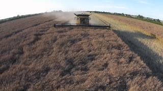 New Holland CR 10.90 Combine Oil Seed Rape, Norfolk