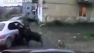 getlinkyoutube.com-insane Wild boar attacks people on the street