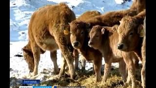 Белгородские аграрии получили первые льготные кредиты