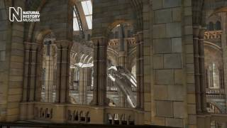 The Museum is changing | Natural History Museum