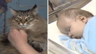 getlinkyoutube.com-Gata salva de morir de frío a bebé abandonado en Rusia