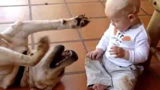 getlinkyoutube.com-baby and his labrador