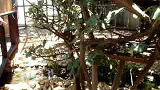 getlinkyoutube.com-קופיפים בגן החיות בקרית מוצקין