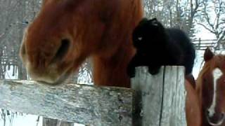 getlinkyoutube.com-Horse and Cat