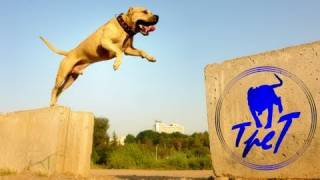 getlinkyoutube.com-TreT-Style (parkour dog from Ukraine)