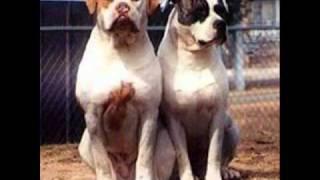getlinkyoutube.com-Top 16 Best Dog Guard