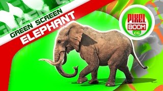 Green Screen Elephant Walks Runs Attack Dies - Footage PixelBoom CG
