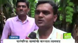getlinkyoutube.com-Patil brothers' Banana farming success story