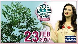 getlinkyoutube.com-Sohanjna Kay Patton Kay Fawaid   Subah Saverey Samaa Kay Saath   SAMAA TV   23 Feb 2017