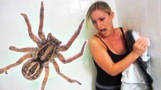 getlinkyoutube.com-EXTREME SPIDER SCARE