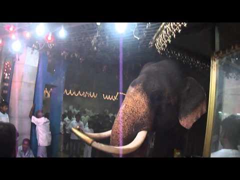 Elephant of Kataragama dewalaya