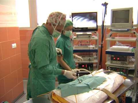 www.hvflota.com - Castración de mascotas por Laparoscopia Hospital Veterinario La Flota