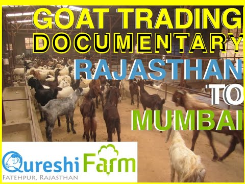 Full Documentary on Eid Goats & journey from Rajasthan to Deonar Bakra Mandi, Mumbai