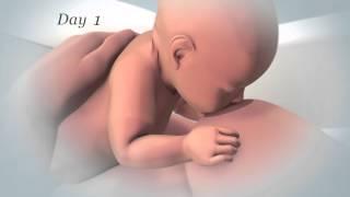 getlinkyoutube.com-Initiation of Breastfeeding (English)