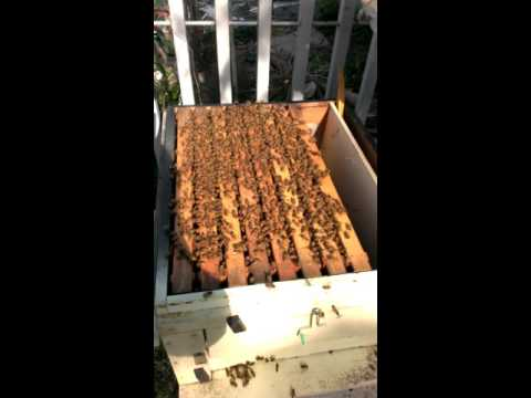 養殖蜜蜂的生態