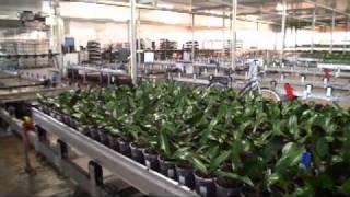 getlinkyoutube.com-Inside Ter Laak Orchids