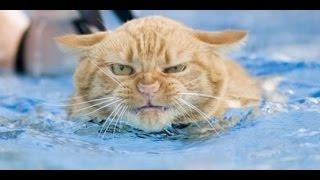 getlinkyoutube.com-Смешные коты в воде! Подборка 2014!