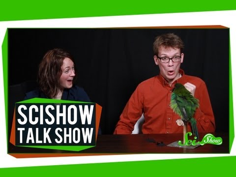More About Cats, & Gonzo the Toucanet: SciShow Talk Show Episode 6