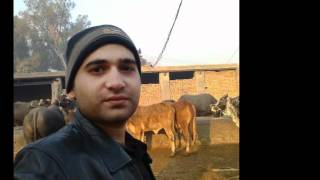 Ya Qurbaan )hindko Song Adil Shah.mp4