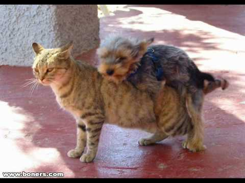YouTube Mating Dog http://www.remusicas.org/videos/cat-dog-crossbreed-;lcf8p3yq-PI.html