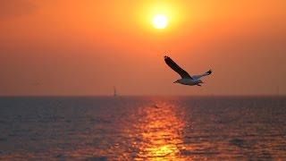 getlinkyoutube.com-อาทิตย์ ดี มีสุข ให้พลังใจ ให้ความรัก ให้เชื่อมั่นตนเองตลอดไป - เก็บตะวัน